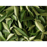 Fresh Curry Leaves (3/4 ounce bag)